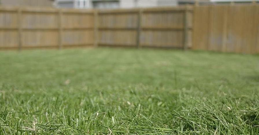 Lawn Care Tips: Mow Like a Pro