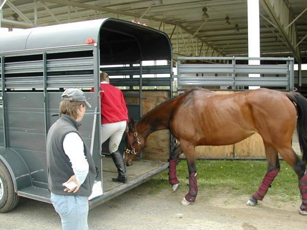 Loading a horse into a clean trailer