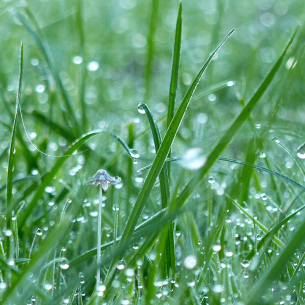 Early morning dewy grass.