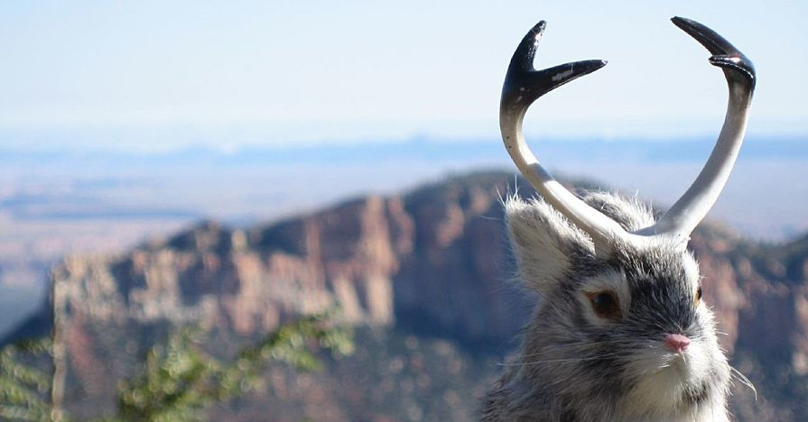 Six Car Myths Debunked: Just LIke the Majestic Jackalope
