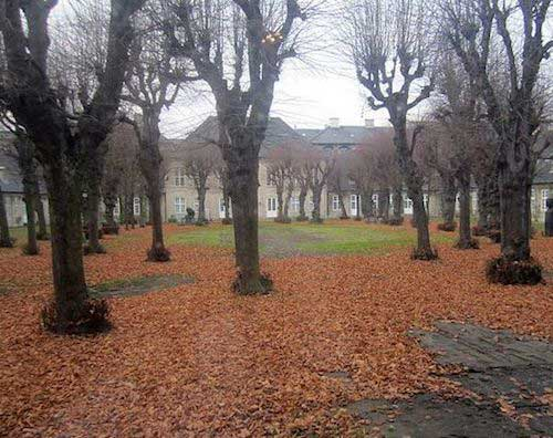 A lawn covered with leaves as winter settles in.