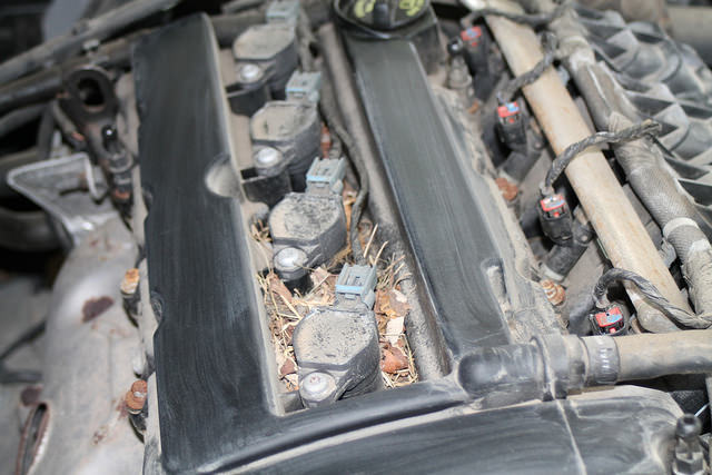 Mouse nest under engine cover