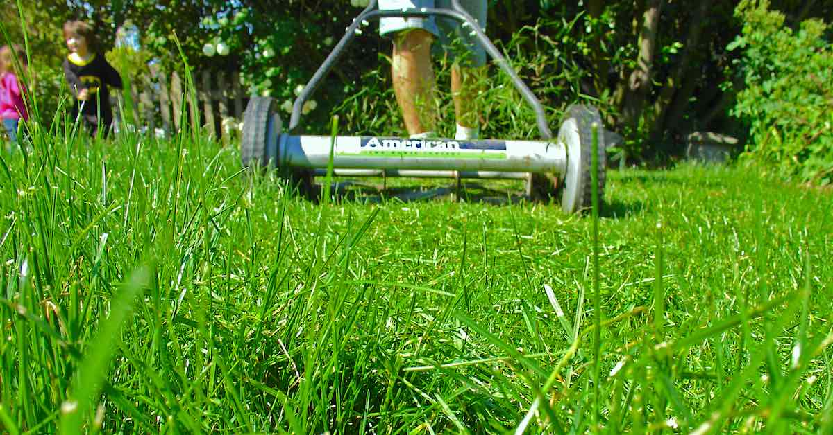 Mowing lawn needs grass clipping disposal