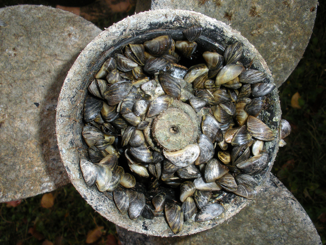 Boat washing helps prevent the spread of Zebra mussels