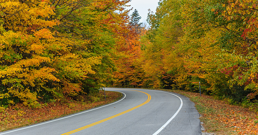 Fall driving hazards include distracting, slippery, yet striking foliage like this.