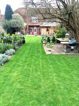 A well-trimmed lawn is your goal, but what
