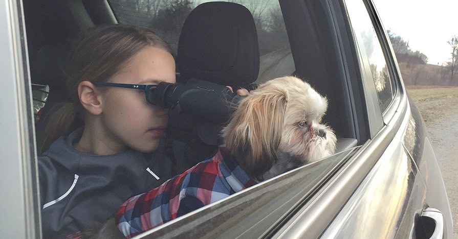 From the backseat of a car, a girl with binoculars and her dog look out the window, watching for birds.