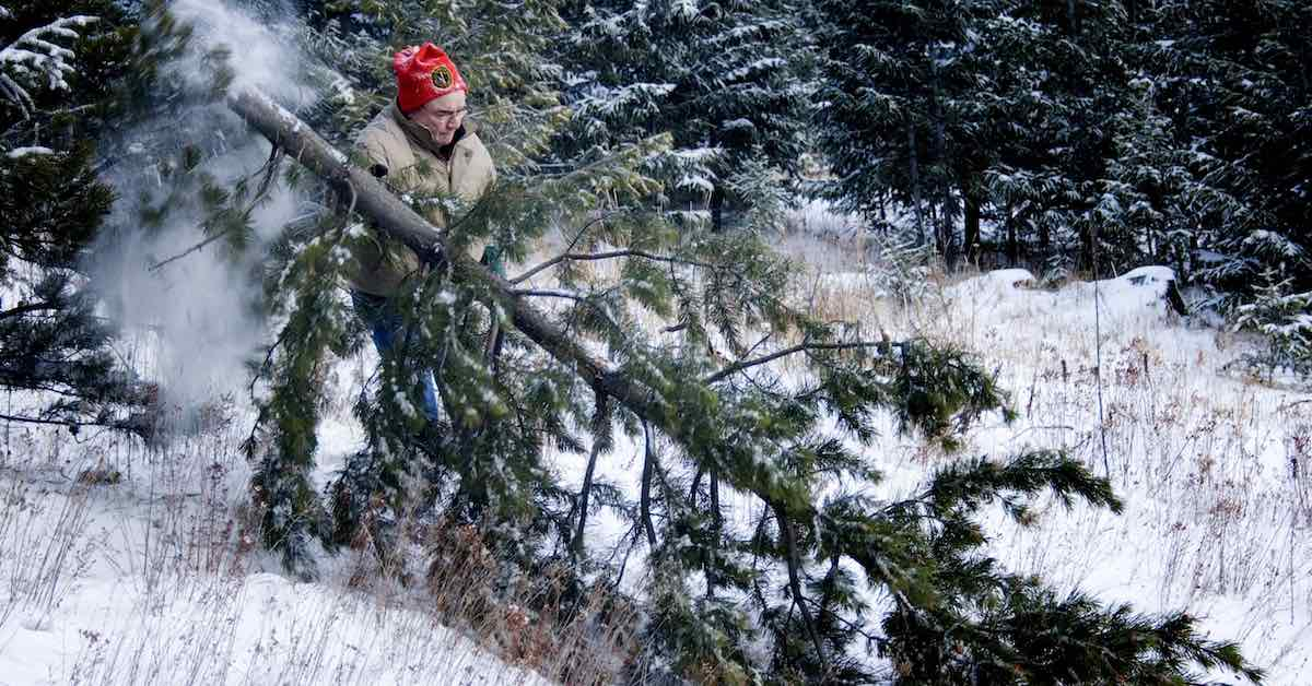 A man cutting down a Christmas tree in a snowy wood
