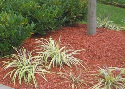 A Garden Covered in Mulch