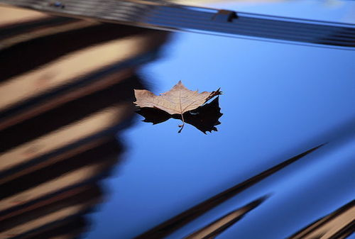 Remove leaves from your car to avoid staining, because Leaves Damage Car Paint.