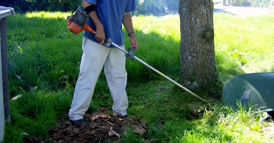 A man trims weeds around a tree in his lawn with a weed whacker. Knowing whether your needs are light duty, like this example, will help you learn how to choose a weed trimmer.