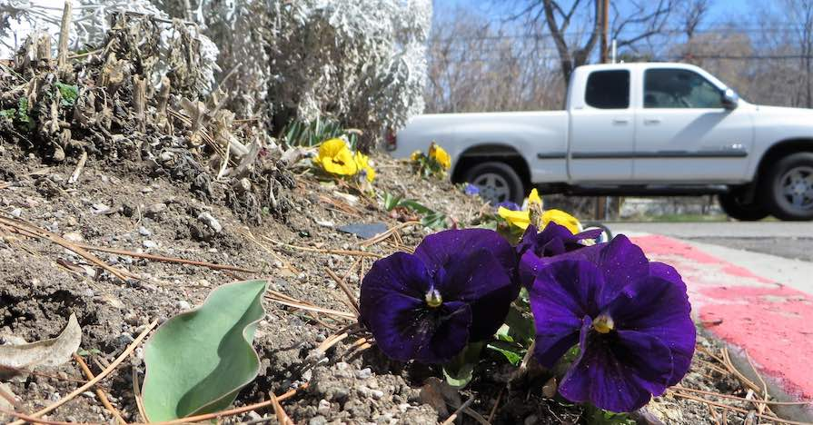 Flowers emerging in front of a truck. When flowers start to sprout, it's a good time to complete a springtime tune-up on your car.