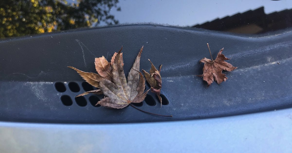 Leaves on vehicle air vent. Taking a few moments to clear your air vents of debris will prevent clogging and allow fresh air to enter your car's cabin.