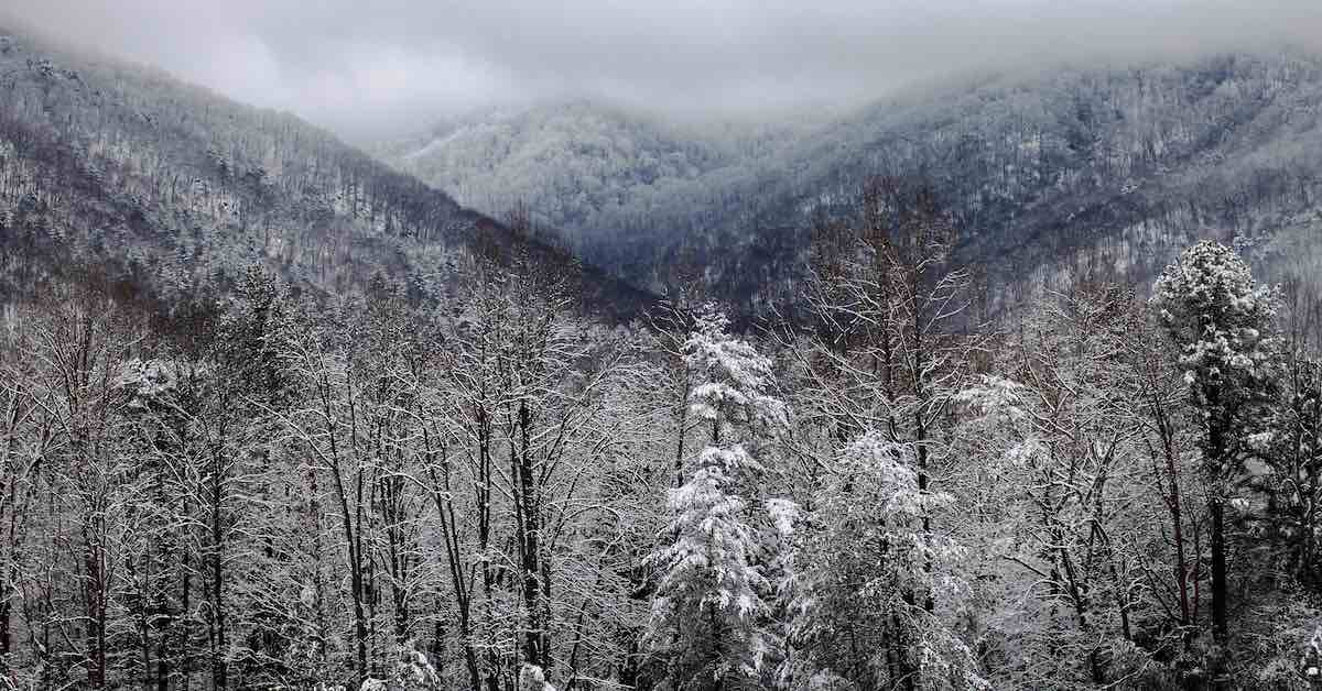 Fresh snowfall in the Great Smoky Mountains National Park, Tennessee.