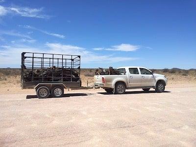 white pickup towing trailer