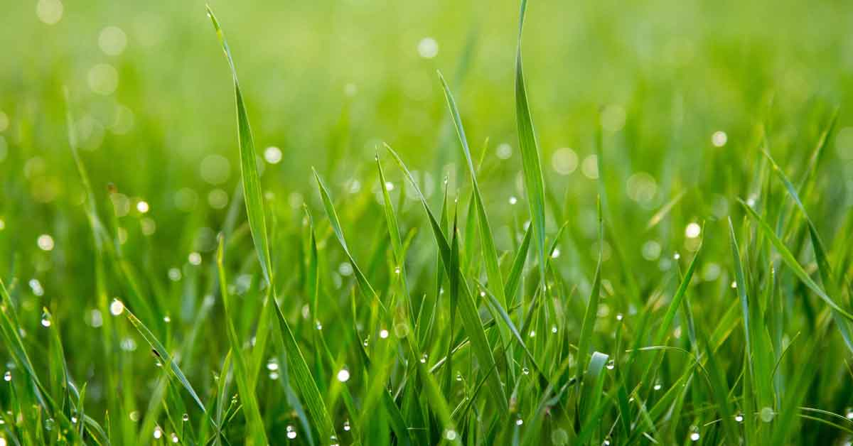 Green blades of grass.