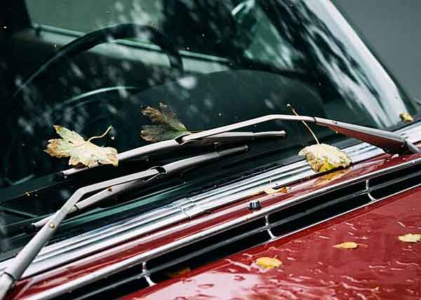 Windshield wipers covered in fall leaves